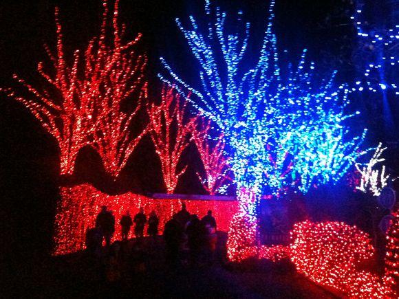 day 323 (zoo lights)